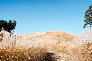 秋のススキが美しい岩湧山ハイキング