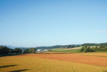 果てしなく続くのどかな絶景!北海道・富良野パノラマロードのラニングコース
