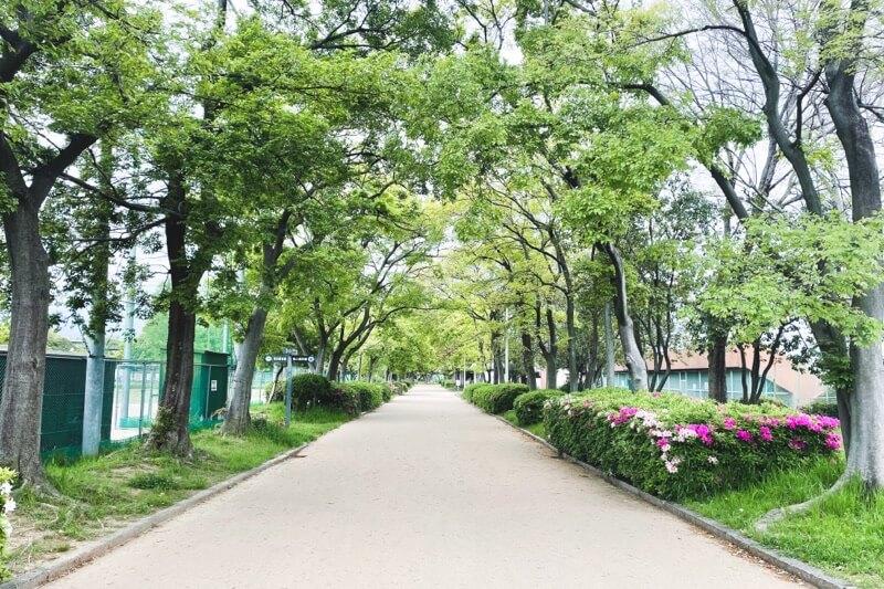 久宝寺緑地並木道